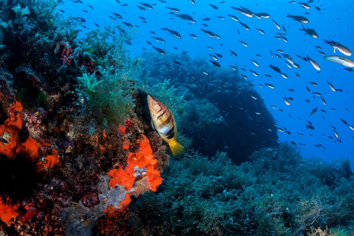 Danger mer Méditerranée